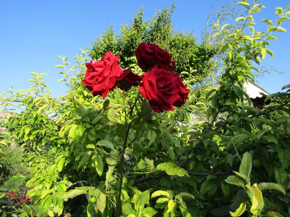 Цветы на заказ до 500 рублей